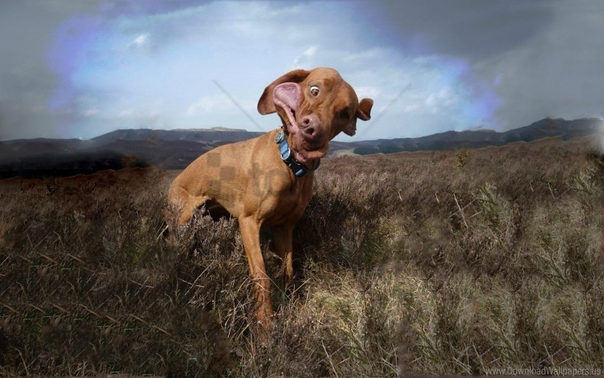 free PNG cloudy, collar, dog, field, grass, wind wallpaper background best stock photos PNG images transparent