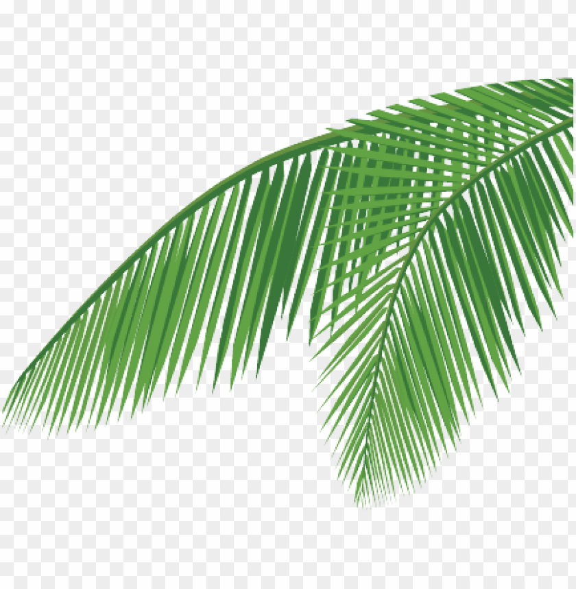 free PNG coconut leaf png - coconut leaf vector PNG image with transparent background PNG images transparent