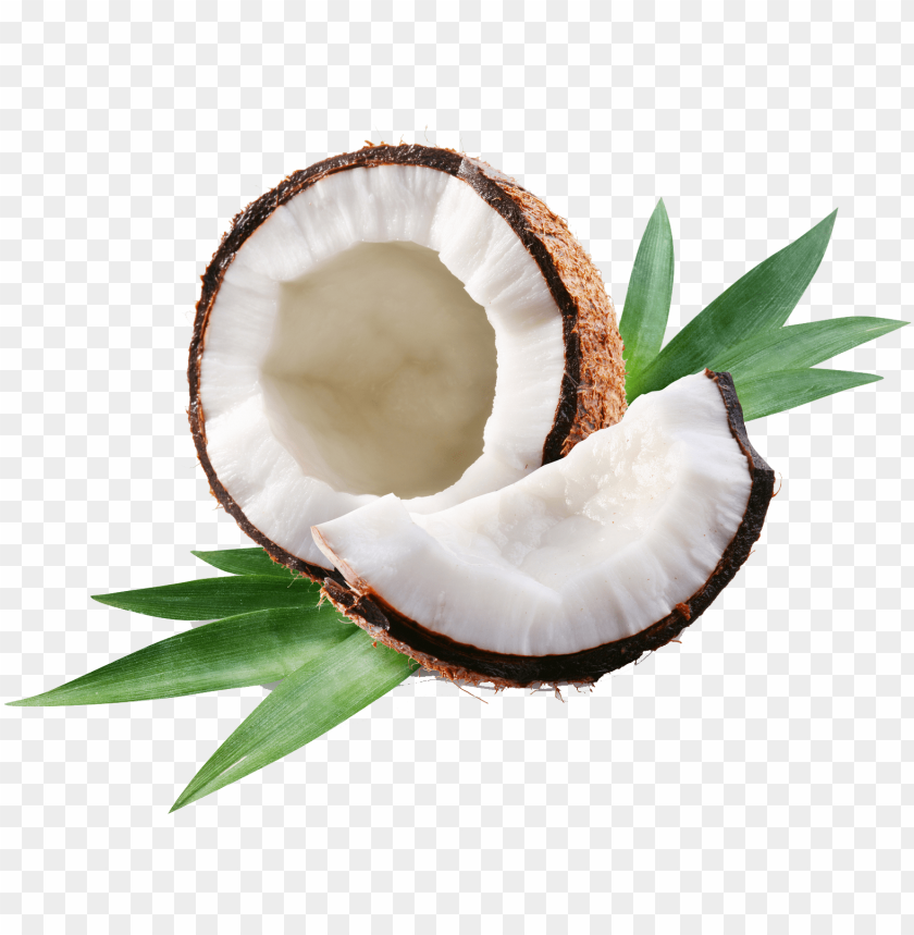 free PNG coconut oil: teach me everything i need PNG image with transparent background PNG images transparent