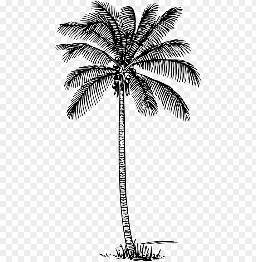 free PNG coconut palm clip art - coconut tree outline PNG image with transparent background PNG images transparent