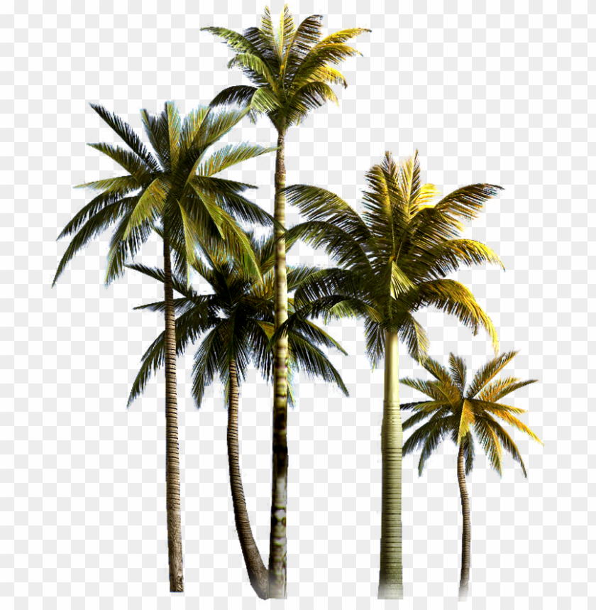 free PNG coconut tree png background image - png format coconut tree PNG image with transparent background PNG images transparent