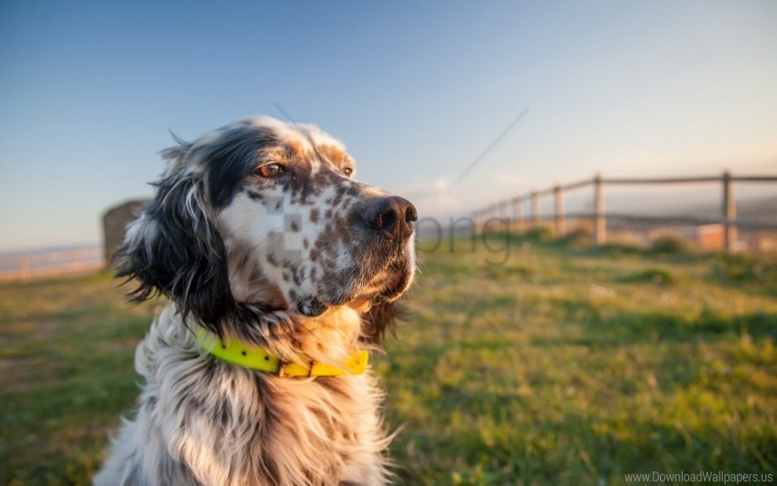 free PNG collar, dog, grass, muzzle wallpaper background best stock photos PNG images transparent