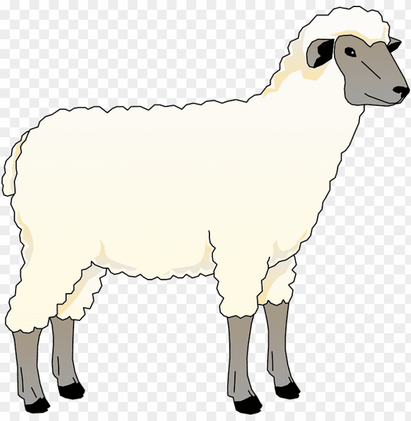 free PNG collection of free heep animal download on - cartoon sheep animal farm PNG image with transparent background PNG images transparent