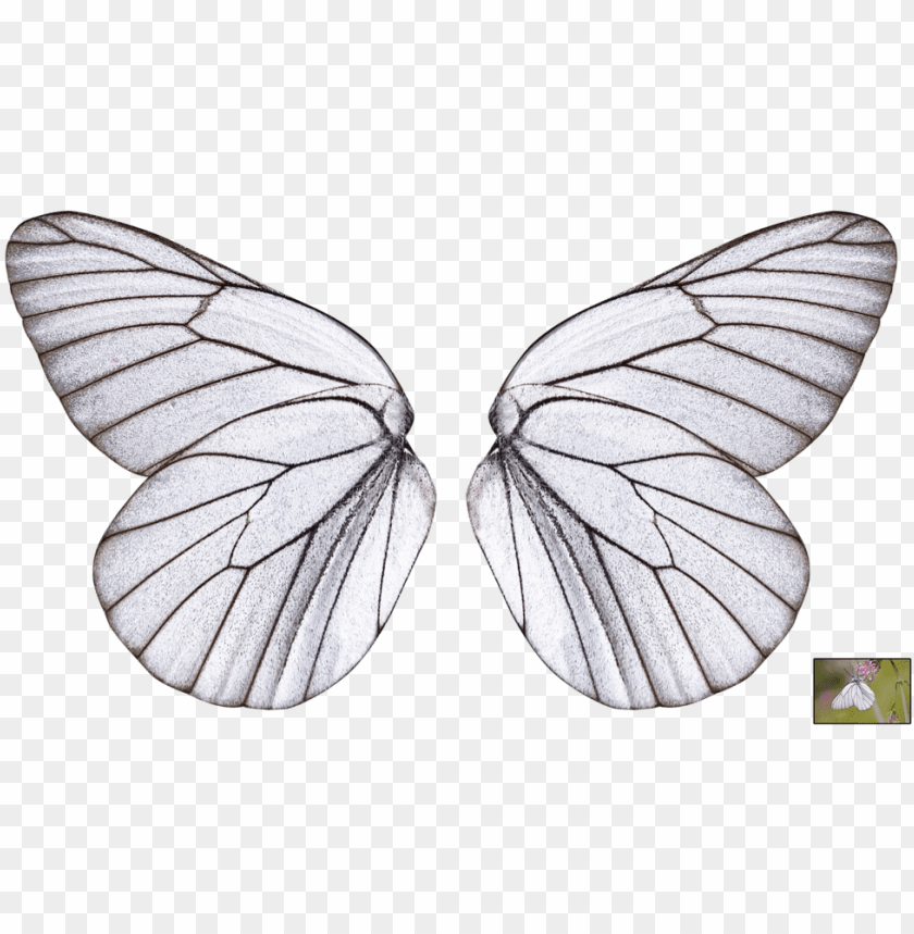collection of free wings transparent butterfly download - butterfly wings transparent background PNG image with transparent background@toppng.com