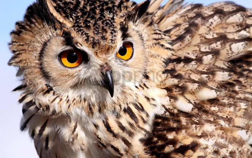 free PNG color, eyes, feathers, owl wallpaper background best stock photos PNG images transparent