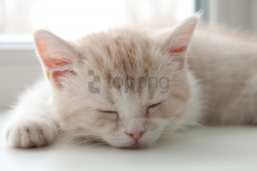 free PNG color, face, kitten, sleep, striped wallpaper background best stock photos PNG images transparent