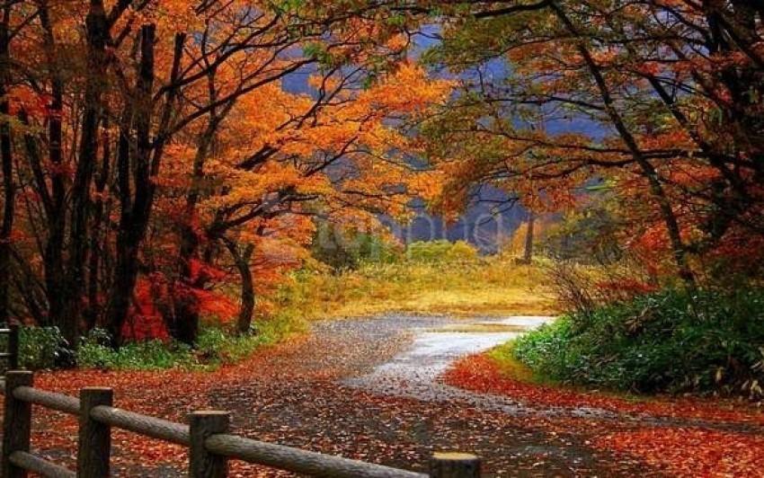 free PNG colorful autumn landscape wallpaper background best stock photos PNG images transparent