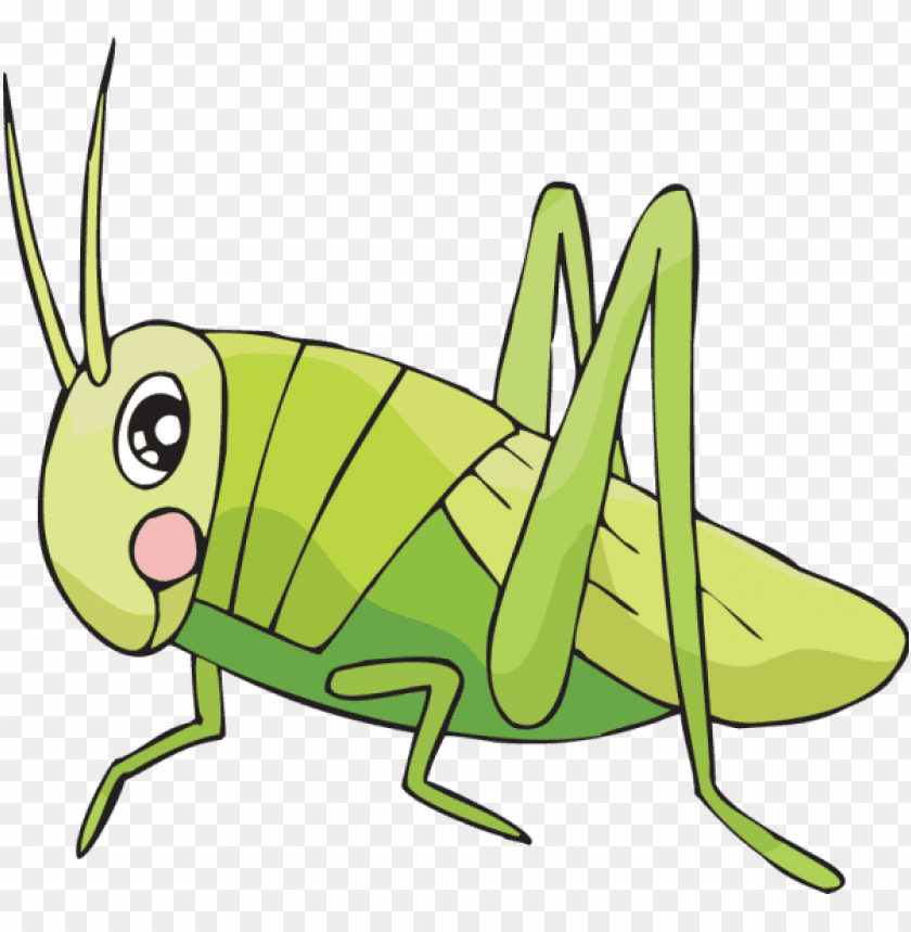 free PNG coloring sheets for kids cricket learn to draw by how - cricket insect drawing easy PNG image with transparent background PNG images transparent