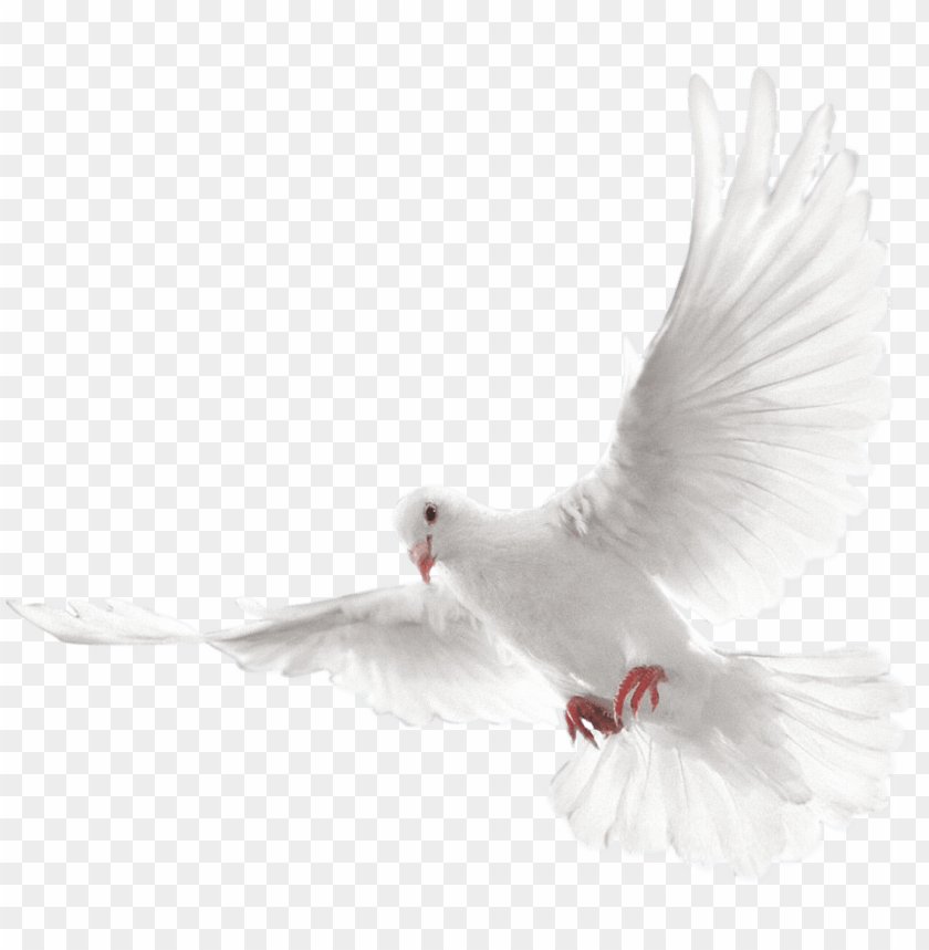 free PNG columbidae doves as symbols - holy spirit dove PNG image with transparent background PNG images transparent