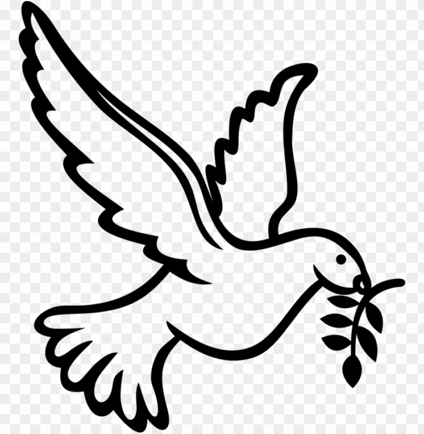 free PNG columbidae holy spirit calvary chapel west hawaii peace - doves clipart PNG image with transparent background PNG images transparent