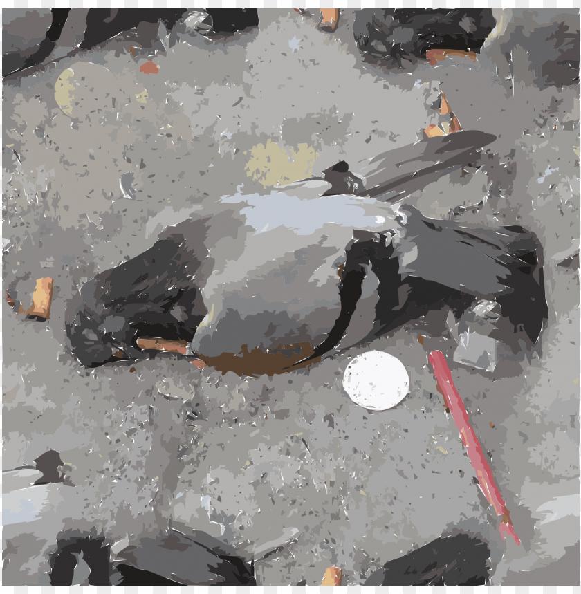 free PNG columbidae homing pigeon watercolor painting computer - smoking kills eu png - Free PNG Images PNG images transparent