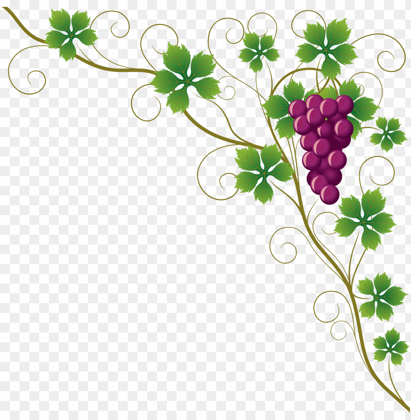 Common Grape Vine Grape Leaves Wine Clip Art Grape Vine Corner Border Png Image With Transparent Background Toppng