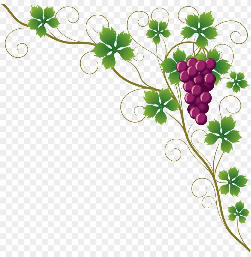 Common Grape Vine Grape Leaves Wine Clip Art Grape Vine Corner Border Png Image With Transparent Background Toppng