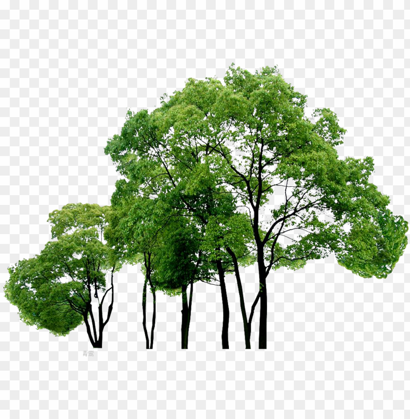 Computer Tree Trees File Free Png Hq Clipart Png File Trees Png Image With Transparent Background Toppng