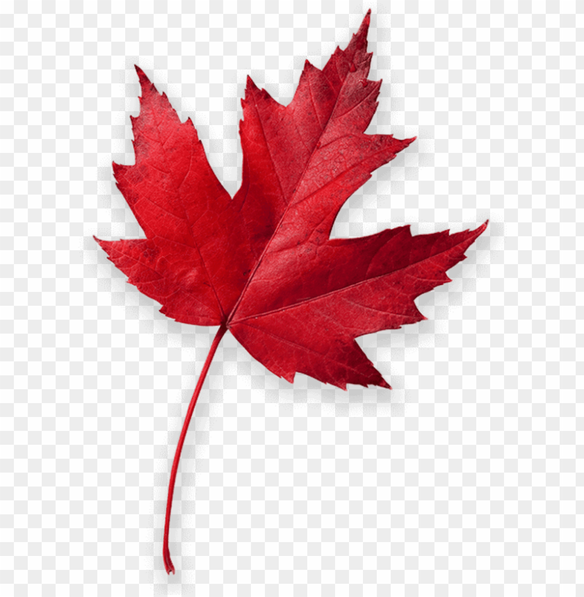 Cool Mountain Air Ignites A Colorful Patchwork Of Autumn Canada Red Maple Leaf Png Image With Transparent Background Toppng
