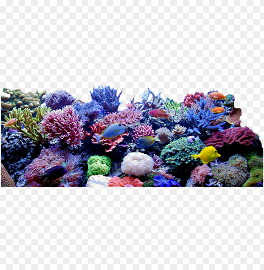 free PNG coral reef clipart png - coral reef transparent background PNG image with transparent background PNG images transparent
