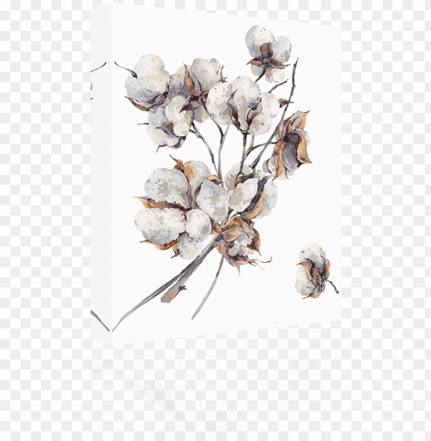 free PNG cotton water color - cotton flower watercolor PNG image with transparent background PNG images transparent