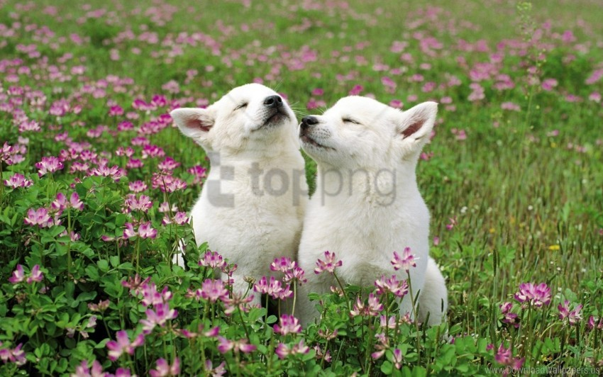 free PNG couple, dog, field, flowers, grass, tenderness wallpaper background best stock photos PNG images transparent
