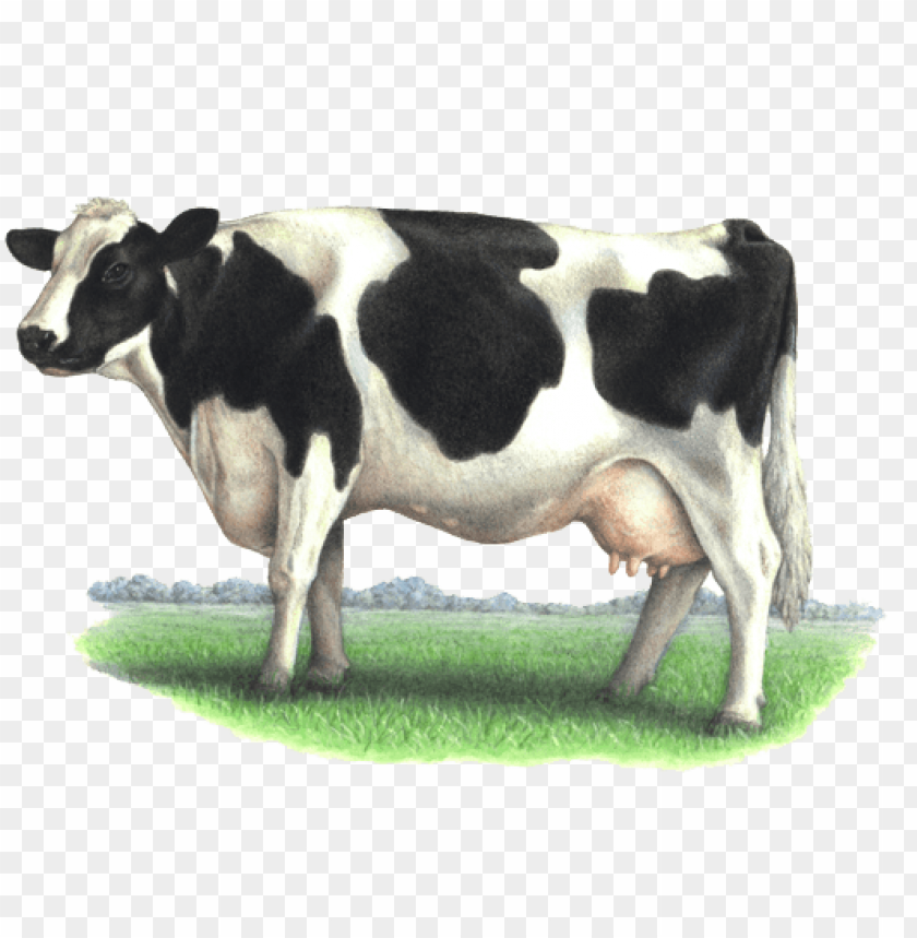 free PNG cow png - dairy cow PNG image with transparent background PNG images transparent
