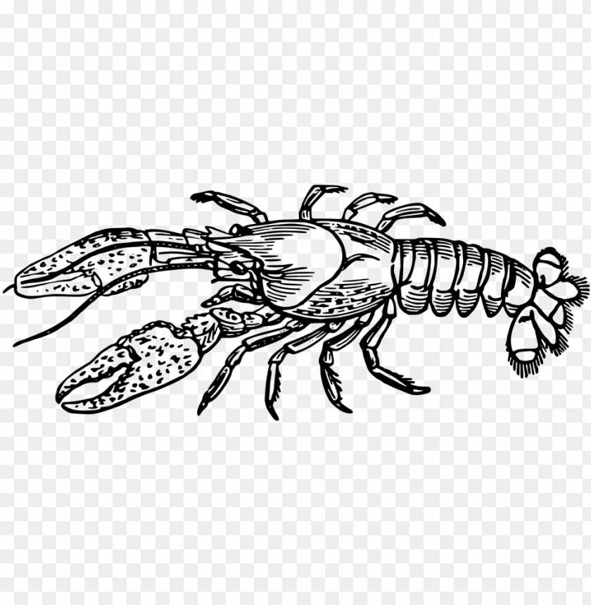 free PNG crawfish clip art 29, - lobster black and white PNG image with transparent background PNG images transparent