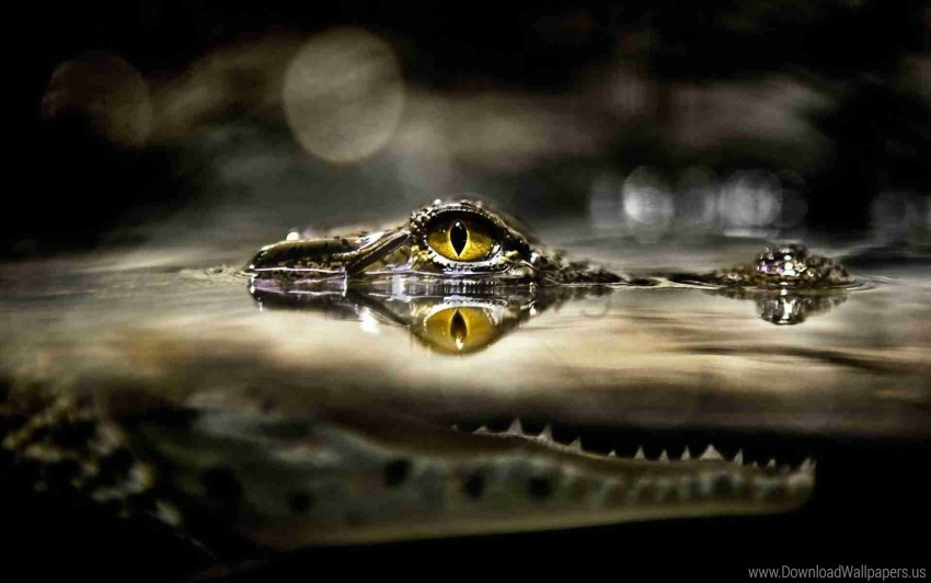 free PNG crocodile, eyes, hunting, lurk, predator, water wallpaper background best stock photos PNG images transparent