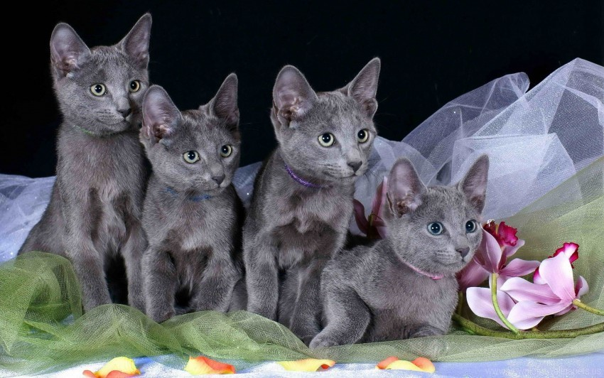 free PNG crowd, kids, kittens, rag wallpaper background best stock photos PNG images transparent