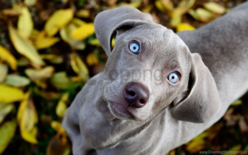 free PNG curiosity, dogs, face, look, observe wallpaper background best stock photos PNG images transparent