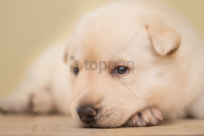 free PNG cute, eyes, face, puppy wallpaper background best stock photos PNG images transparent