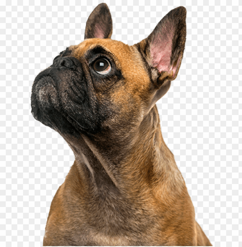 free PNG cute puppy - puppy PNG image with transparent background PNG images transparent