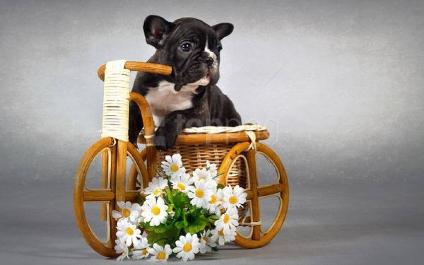 free PNG cute puppy with flowers wallpaper background best stock photos PNG images transparent