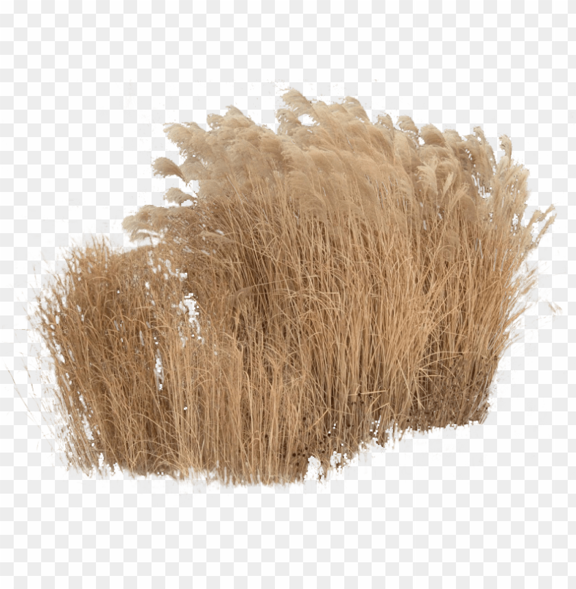 free PNG cutout plant grass grass photoshop, tree photoshop, - grass cutouts PNG image with transparent background PNG images transparent