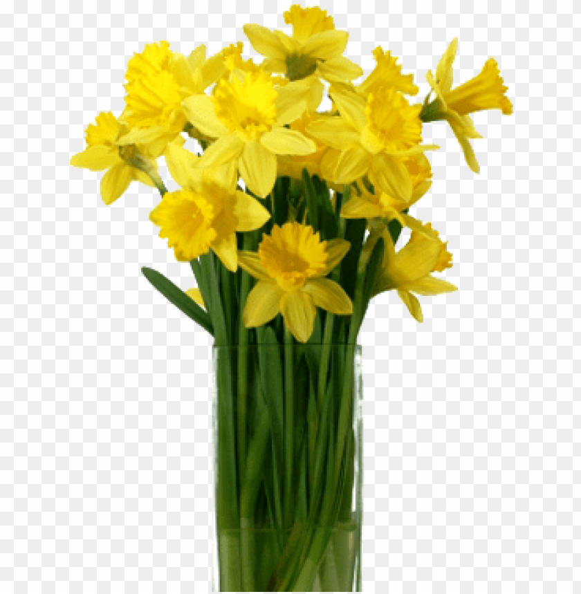 free PNG daffodil flower png photo - yellow flower vase PNG image with transparent background PNG images transparent