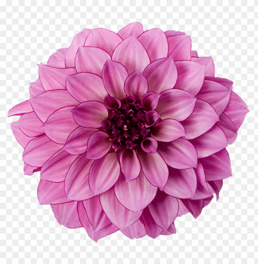 free PNG Download dahlia free download png png images background PNG images transparent