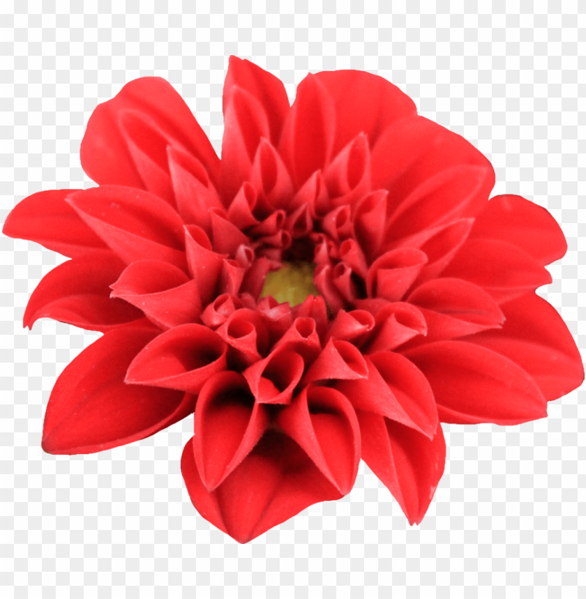 free PNG Download dahlia transparent png images background PNG images transparent