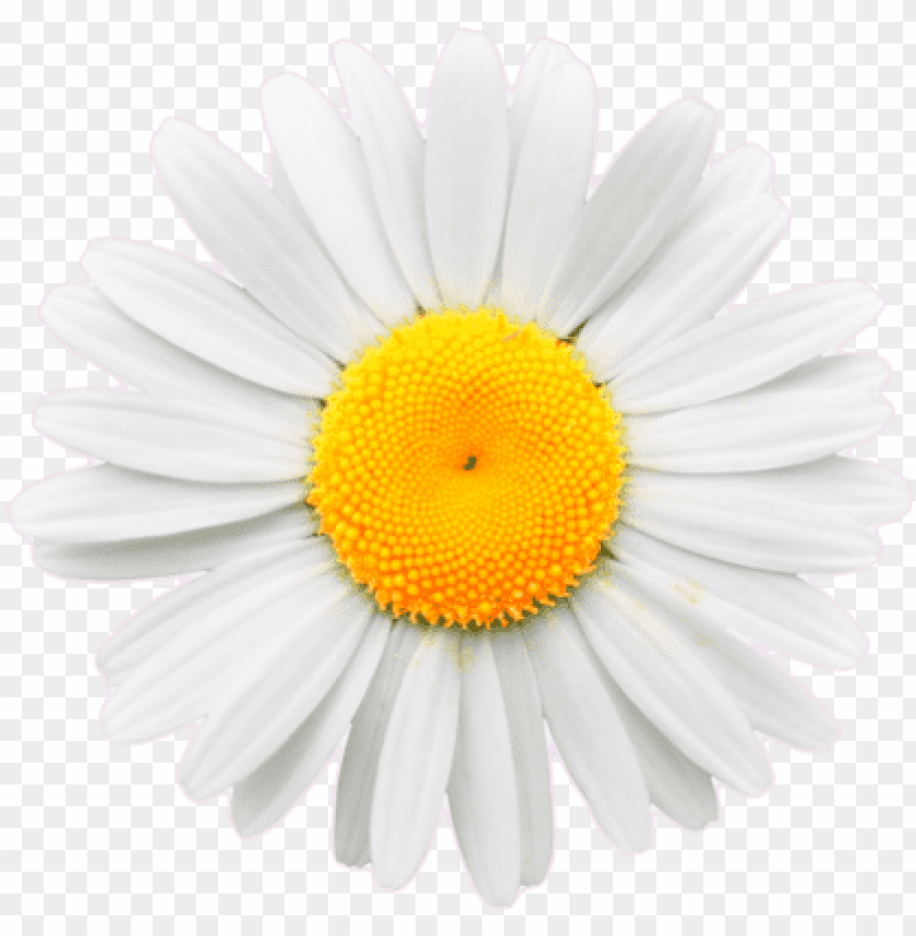 free PNG daisy flower crown tumblr transparent - daisy png transparent background PNG image with transparent background PNG images transparent
