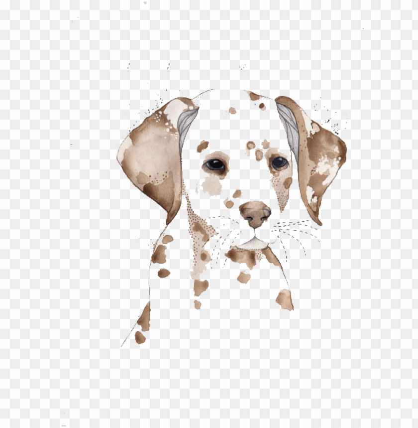 free PNG dalmatian dog watercolor painting drawing illustration - watercolor images of dogs transparent background vector PNG image with transparent background PNG images transparent