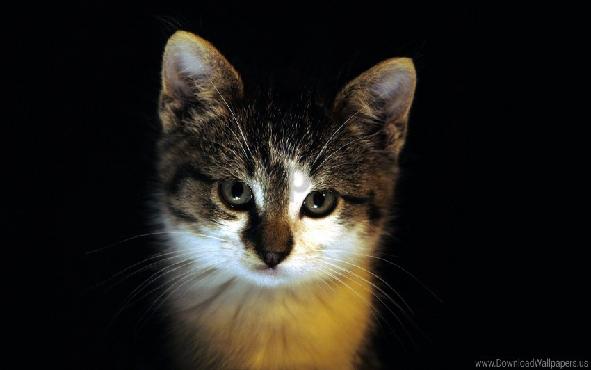 free PNG dark, eyes, face, kitten wallpaper background best stock photos PNG images transparent