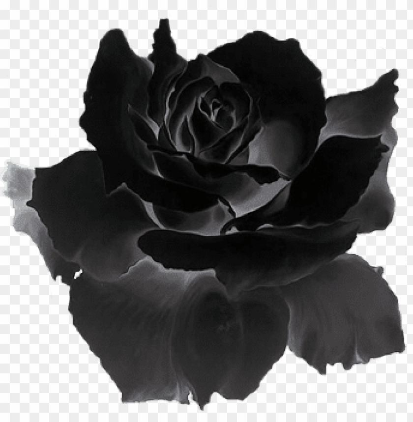 free PNG dark flower png - black is red rose gif PNG image with transparent background PNG images transparent