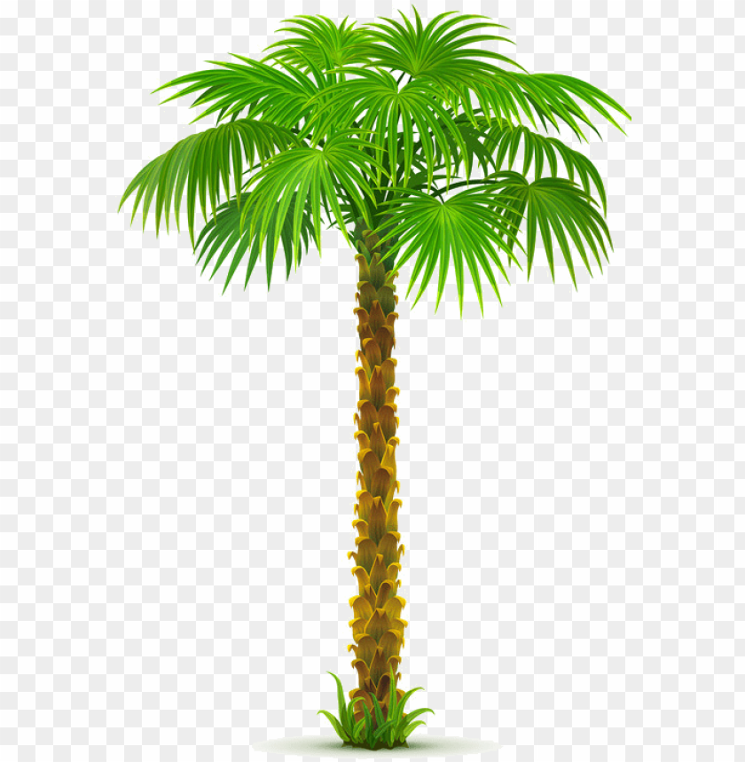 free PNG date tree PNG image with transparent background PNG images transparent