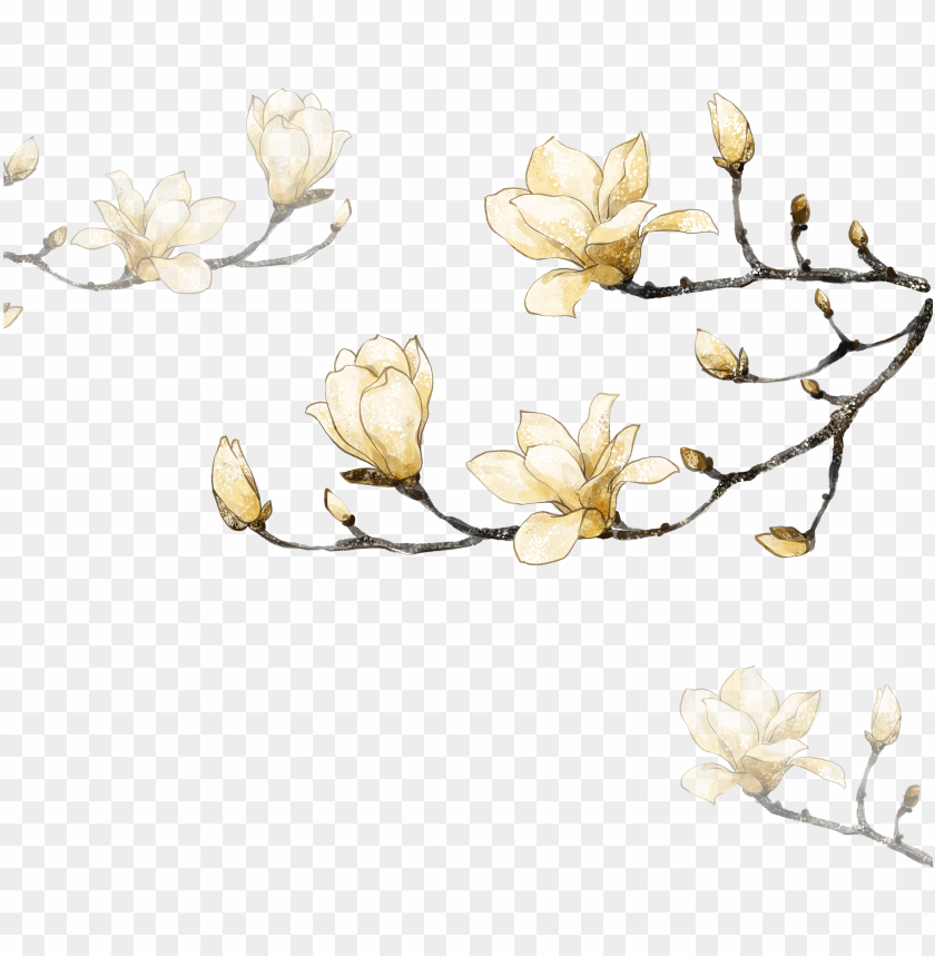 free PNG decorative corner flowers hand-painted free png hq - magnolia white watercolor flowers PNG image with transparent background PNG images transparent