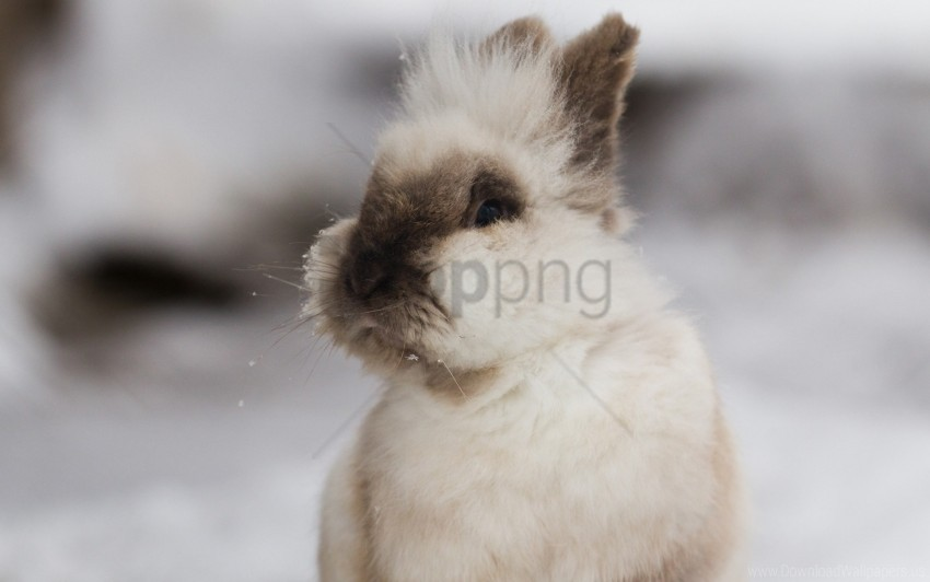 free PNG decorative, ears, fluffy, rabbits wallpaper background best stock photos PNG images transparent