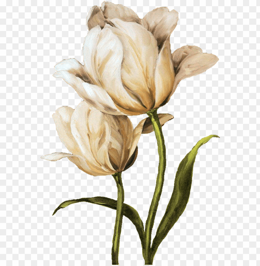decoupage flower, flower painting, flower painting - tulip waltz ii canvas wall art, multicolor, 24x36 PNG image with transparent background@toppng.com