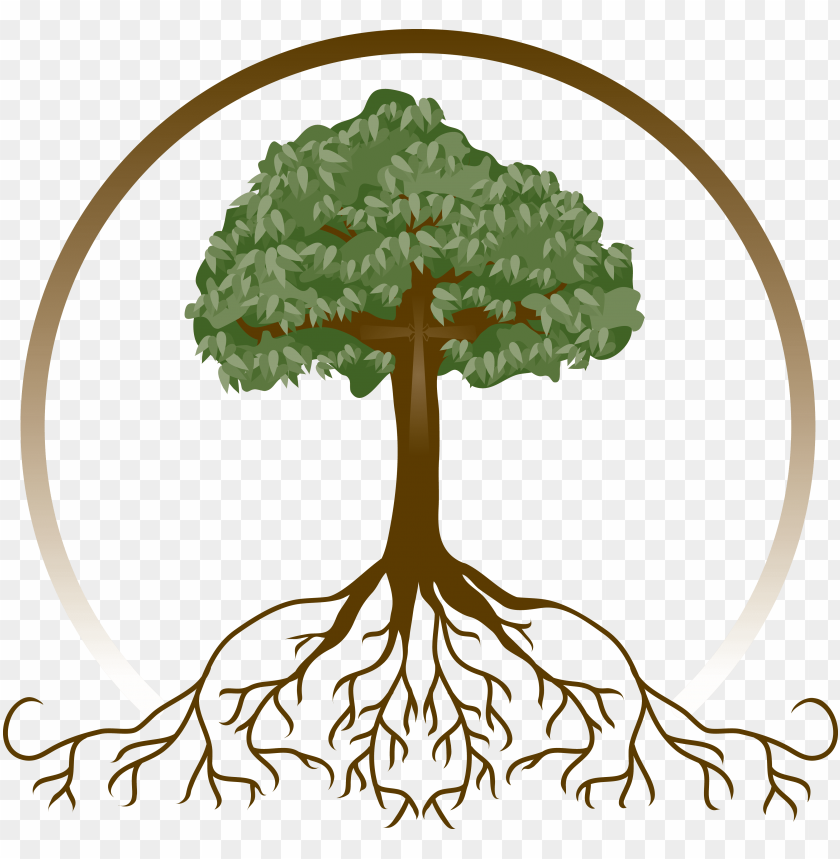 free PNG deeply rooted faith tree sunday school crafts, tree - family tree with roots PNG image with transparent background PNG images transparent