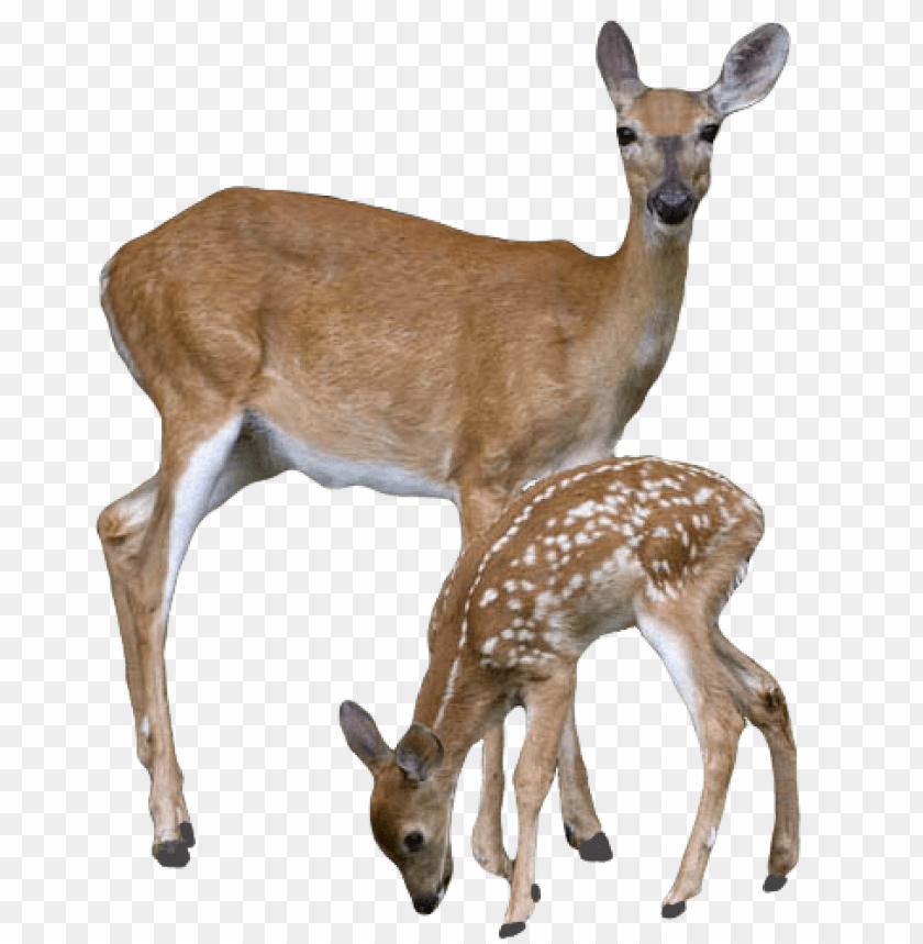 free PNG Download deer png images background PNG images transparent