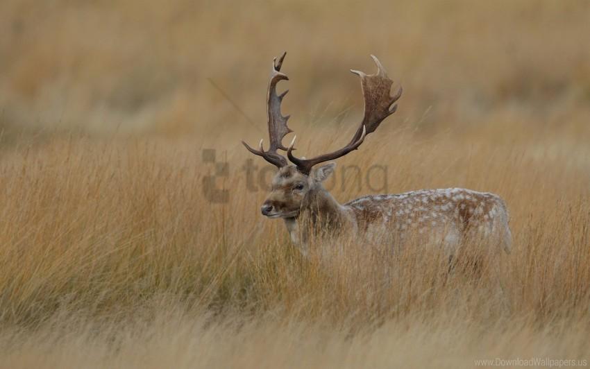 free PNG deer, grass, hidden, walk wallpaper background best stock photos PNG images transparent