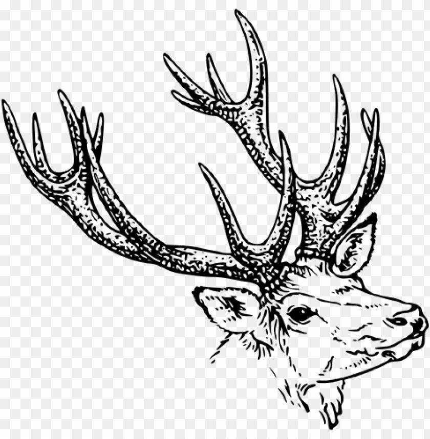 free PNG Download deer illustration bw png images background PNG images transparent