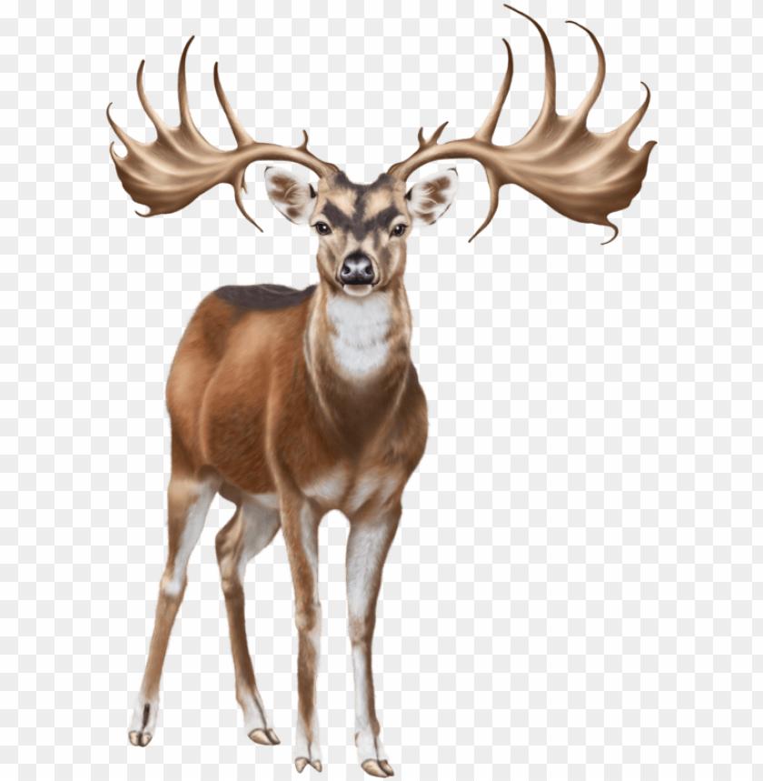 free PNG deer png clip art - white deer png on transparent background PNG image with transparent background PNG images transparent