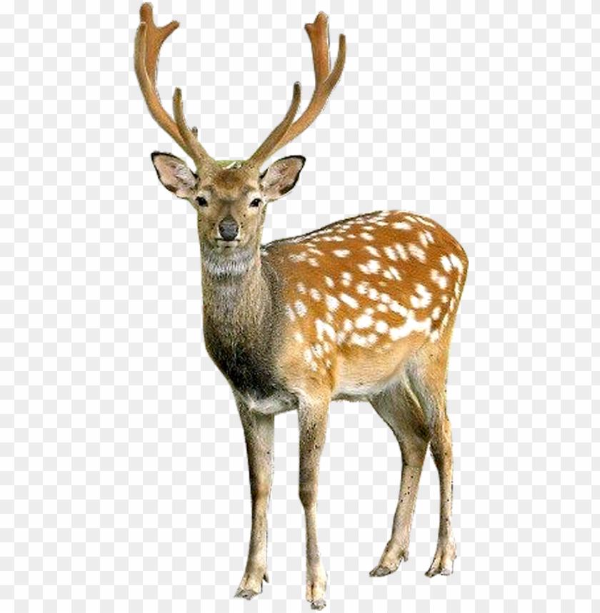free PNG deer png image - deer PNG image with transparent background PNG images transparent