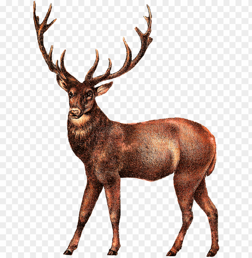 free PNG deer transparent png images - deer transparent PNG image with transparent background PNG images transparent