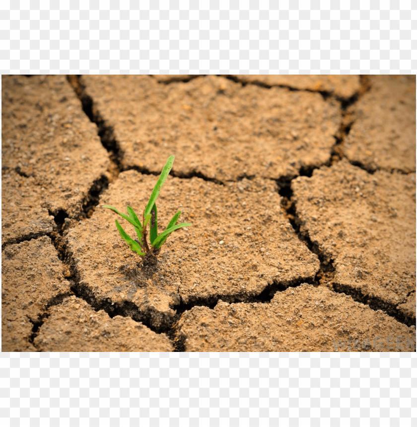 free PNG desertification day PNG image with transparent background PNG images transparent